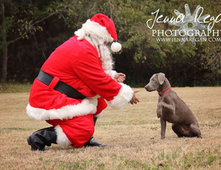 Paws and Claus | DFW |2015