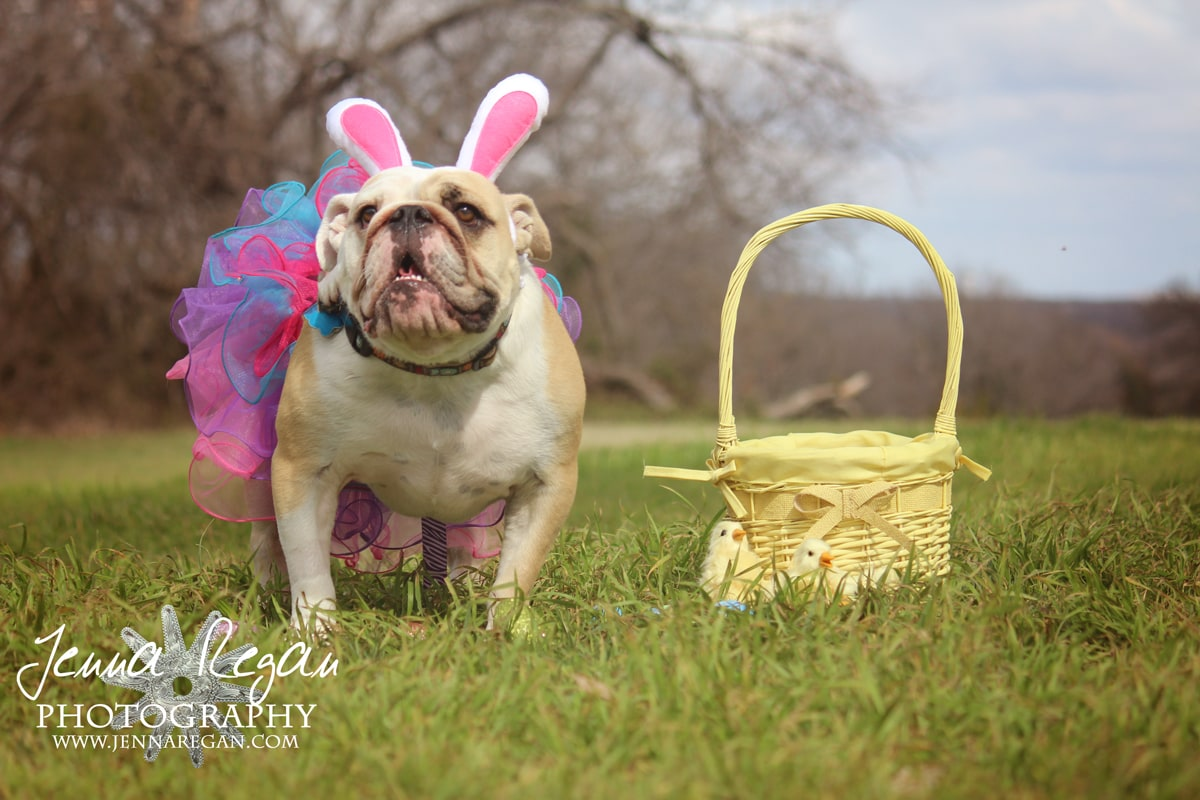 Funny Easter Pictures With Dogs