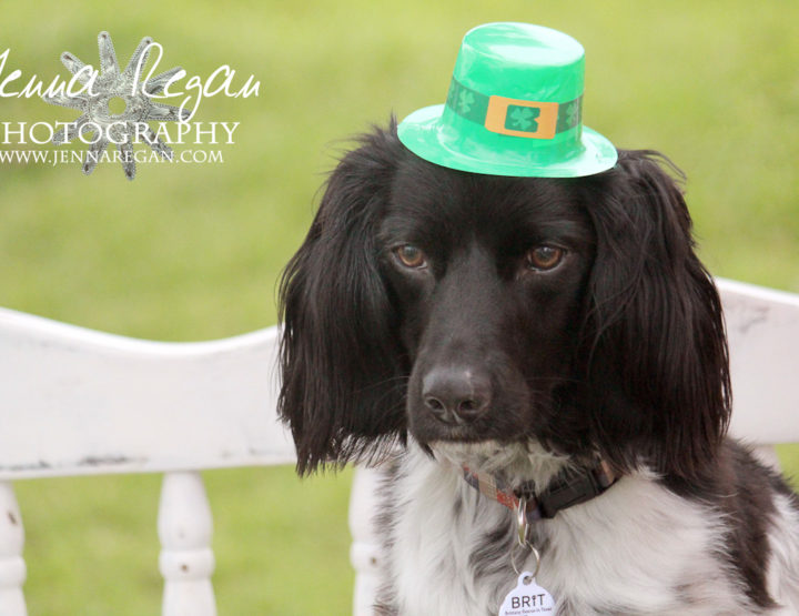 Dog Photography at the North Texas Irish Festival | Dallas Texas