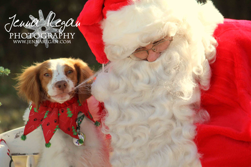 Christmas is for the Dogs!  | DFW Christmas Dog Photos
