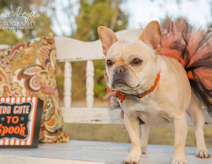 Dallas Dog Halloween Photo Sessions | McKinney TX