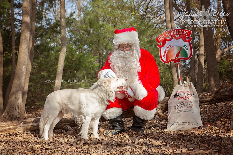 jenna-regan-pet-photography-christmas-dog-photos-dfw