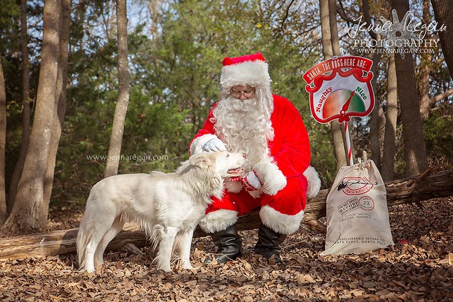 jenna-regan-pet-photography-christmas-dog-photos-dfw