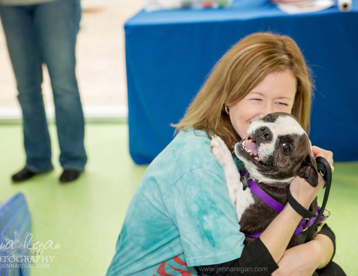 American Boston Terrier Rescue | Dog Event |  Addison, TX