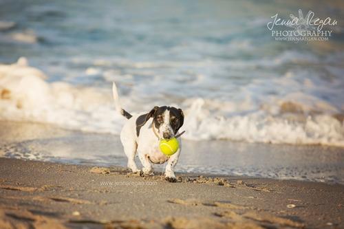 I'm on the Road | Jupiter Florida | Pet Photography