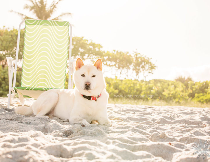 Koda the Shiba Inu | Dog Beach Photo Session | South Florida