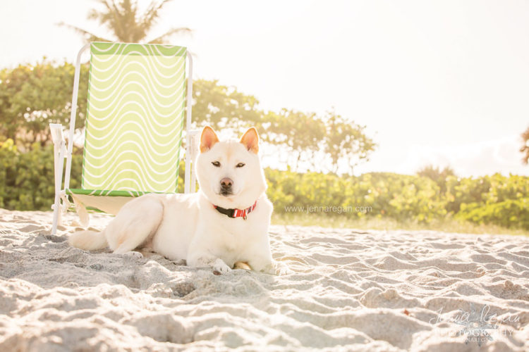 beach pet photography south florida