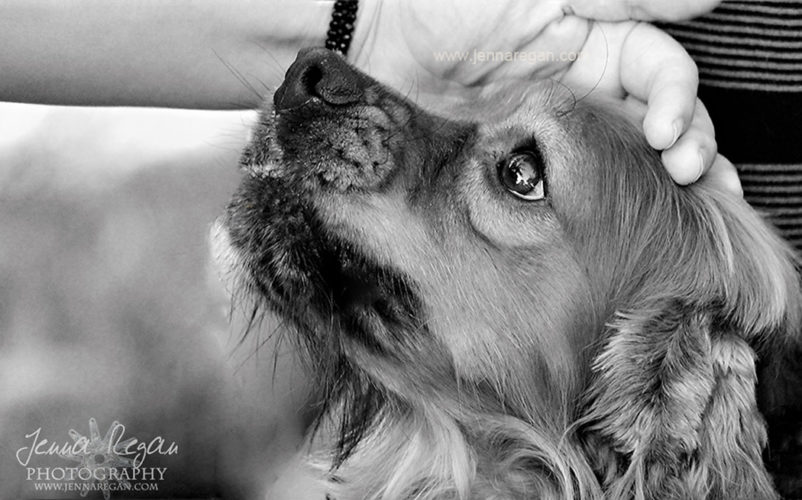 black and white portraits dallas pet photography