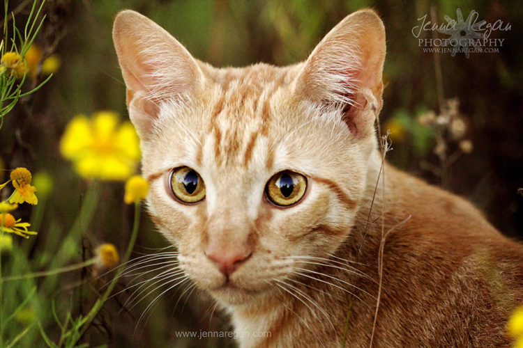 cat photographer dallas texas