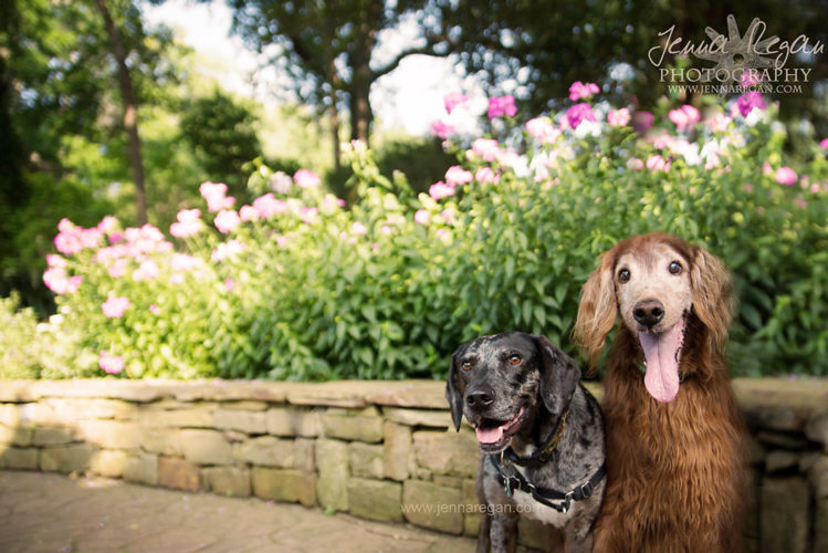 dallas pet photography dogs