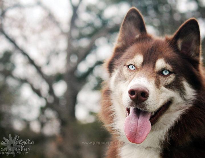 Model Database   Dallas, McKinney, North Texas Pet Photography