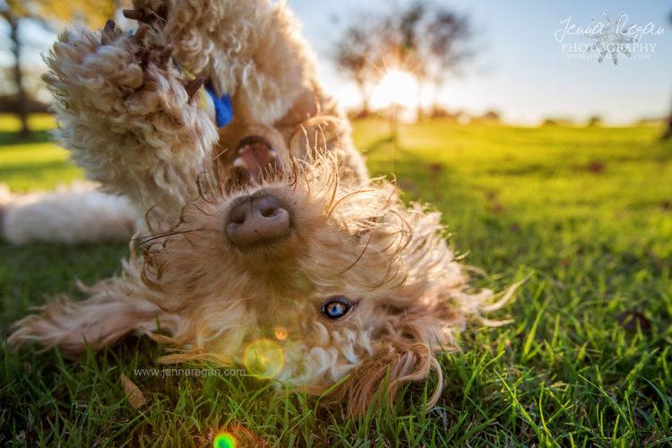 premier pet photographer dallas texas