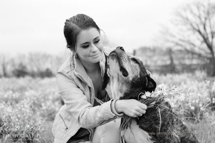senior dog photo package dallas texas