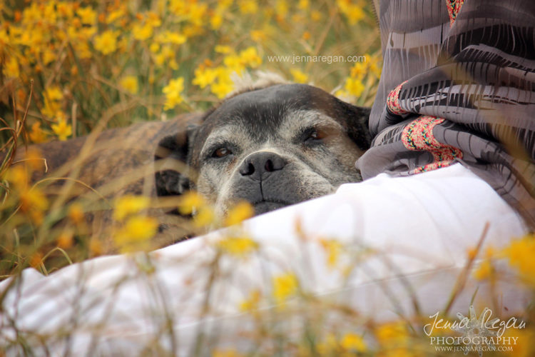 senior dog photo shoot dfw