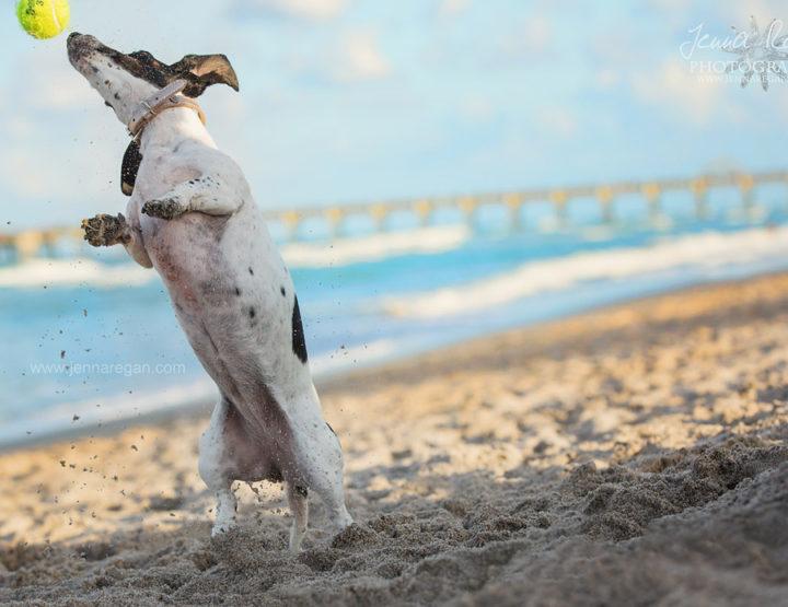 South Florida Dog Photographer | Destination Pet Photography