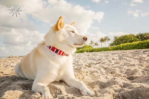 South Florida Dog Photography Session   Jupiter, Florida