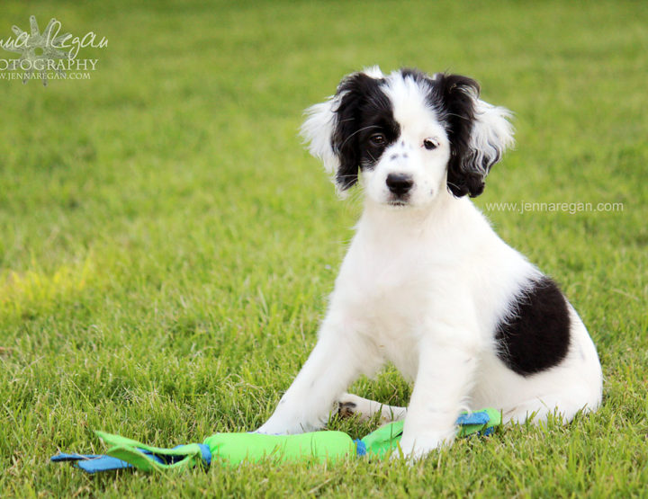 Puppy's First Year Photo Sessions | DFW Puppy Photography