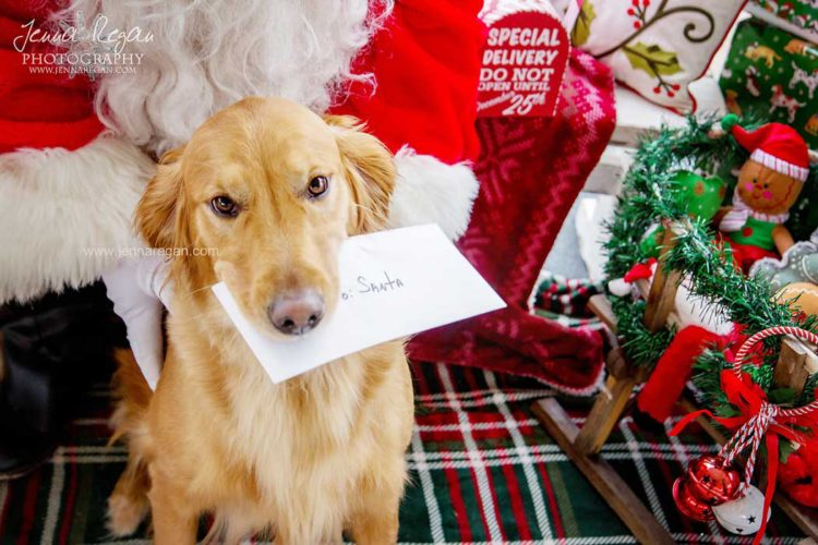 dallas pet santa photos
