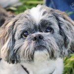 close up of dog tips to photograph your dog dallas texas pet photographer