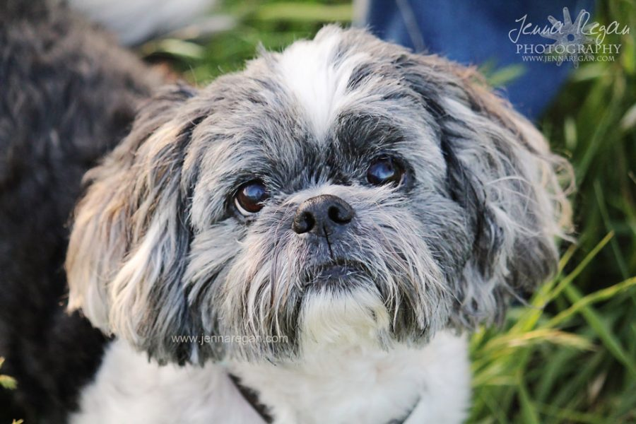 Take Better Photos of Your Dog | Tips from a Professional Pet Photographer