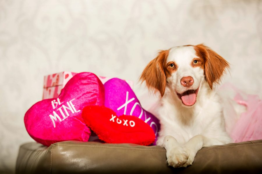 Pups and Kisses: Valentine's Day Pet Photo Sessions 2017 | Melissa, TX