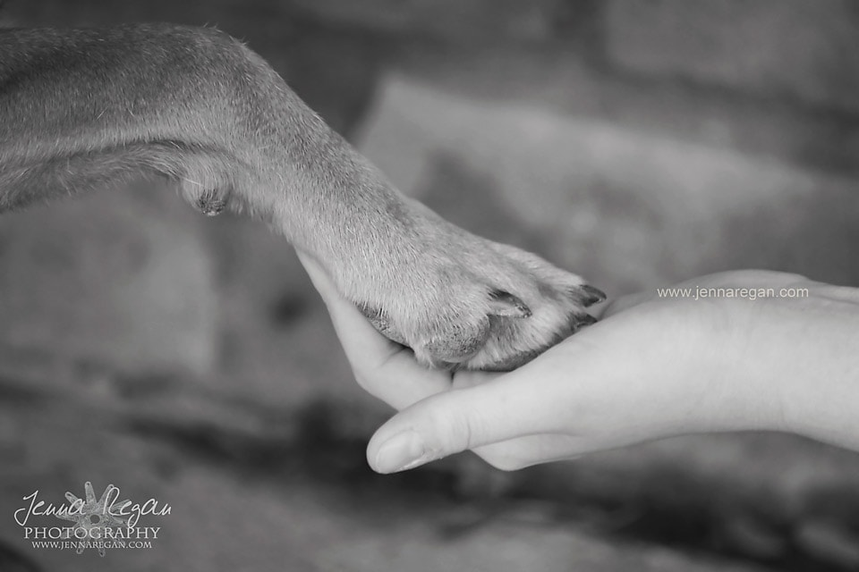 black and white photo of dog paw and hand frisco texas