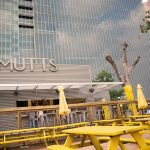 mutss canine cantina a dog park and bar in downtown dallas texas