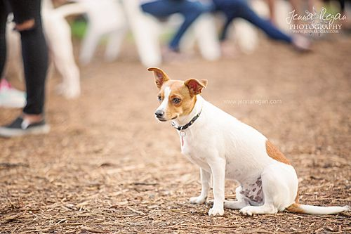 terrier dog sitting at mutts canine cantina dallas