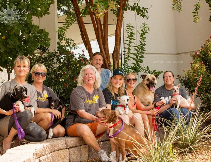 Dallas Dog Adoption Event   MISI   July 2017