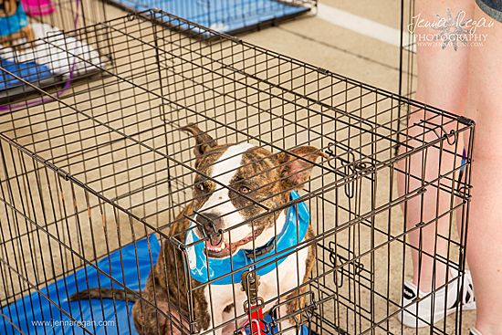 dallas dogrrr dog up for adoption at event