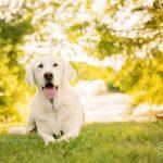 senior dog photo session