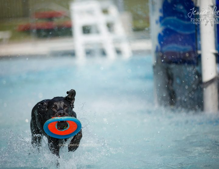 Doggie Paddle | Fort Worth Dog Event Photography