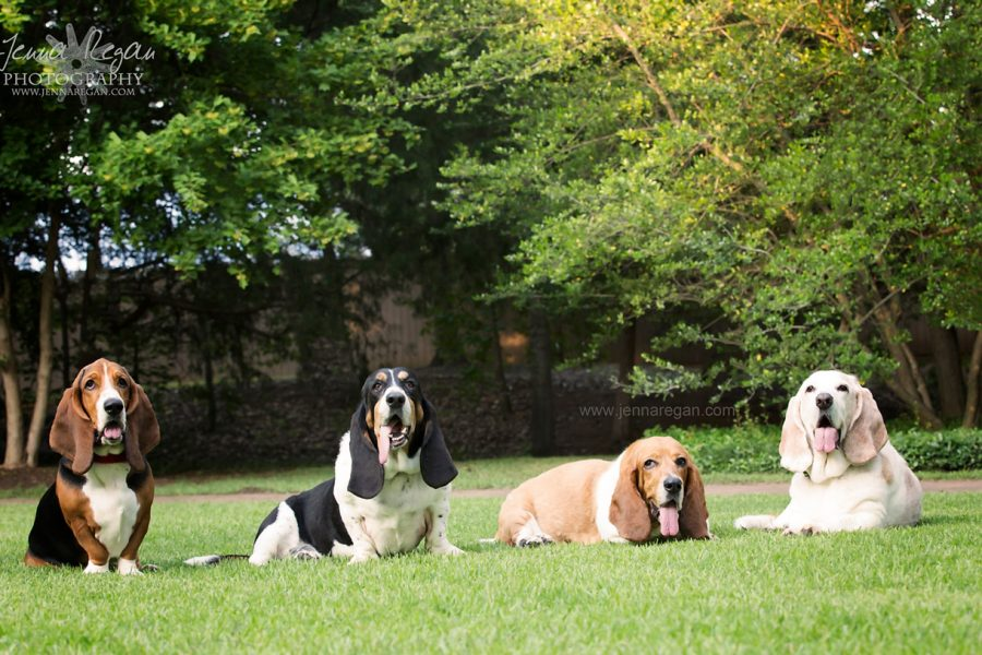 Transformation Tuesday: Photographing a Group of Dogs on Leash