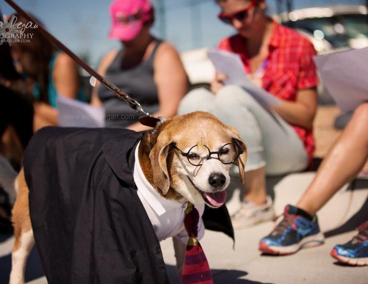 Dog Moms of Dallas Barktoberfest | The Colony