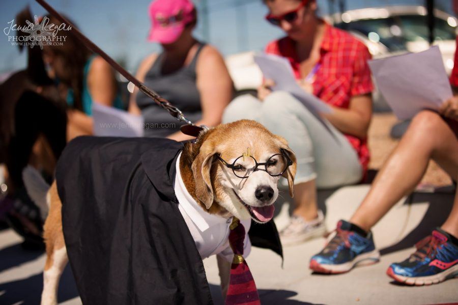 Dog Moms of Dallas Barktoberfest | The Colony