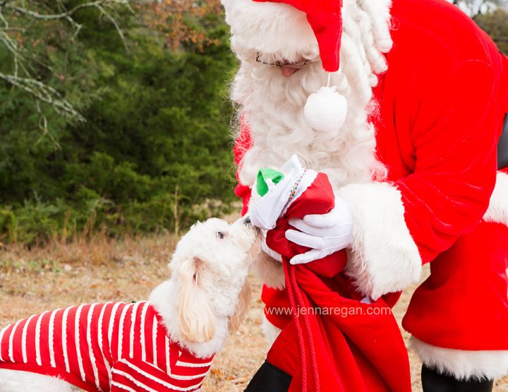 Pet Portraits with Santa 2017 | Dallas Pet Holiday Photos