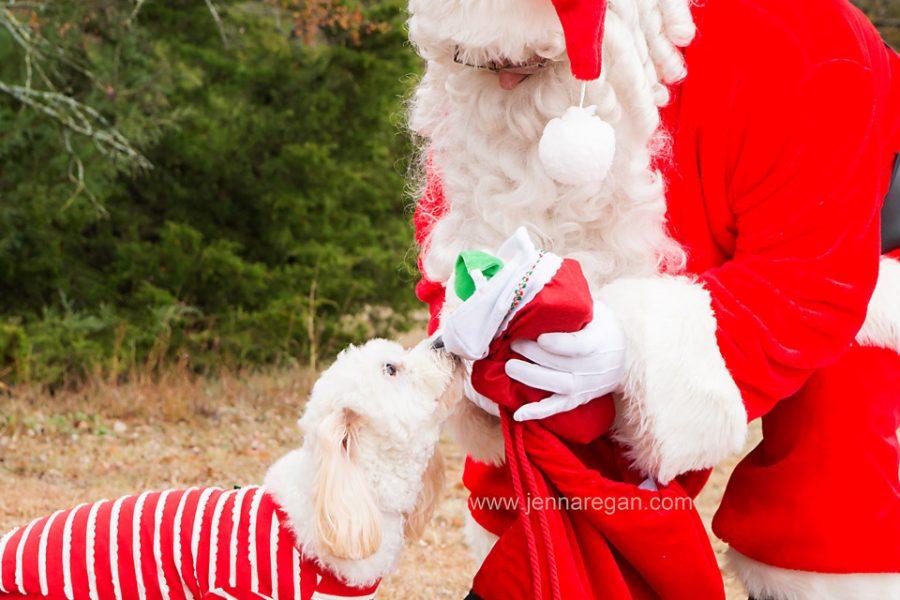 Pet Portraits with Santa 2017 | Dallas Pet Holiday Photos