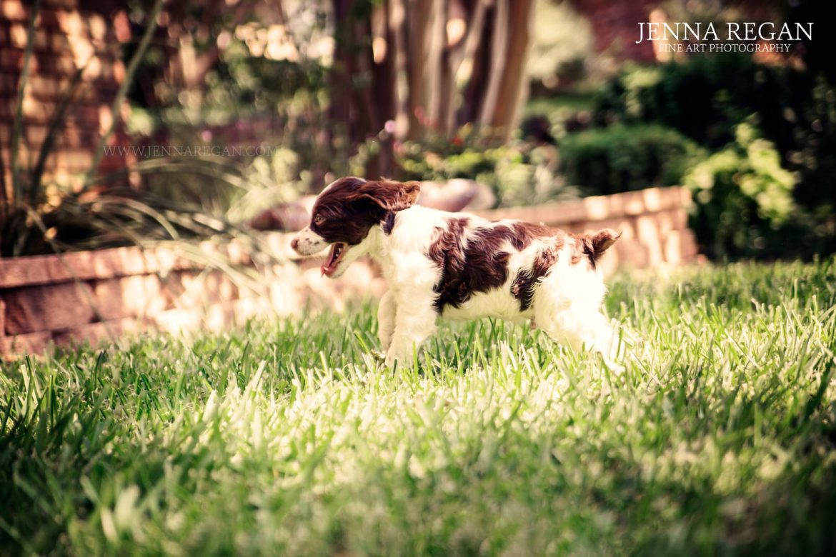 Happy National Puppy Day! | Behind the Scenes of a Puppy Photo ...