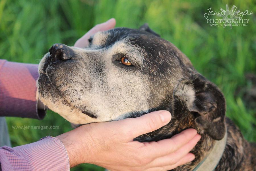 Senior Dog Photo Sessions | Dallas, TX