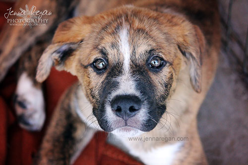 Pet Photography for a Cause: Helping a McKinney, Texas Dog Rescue