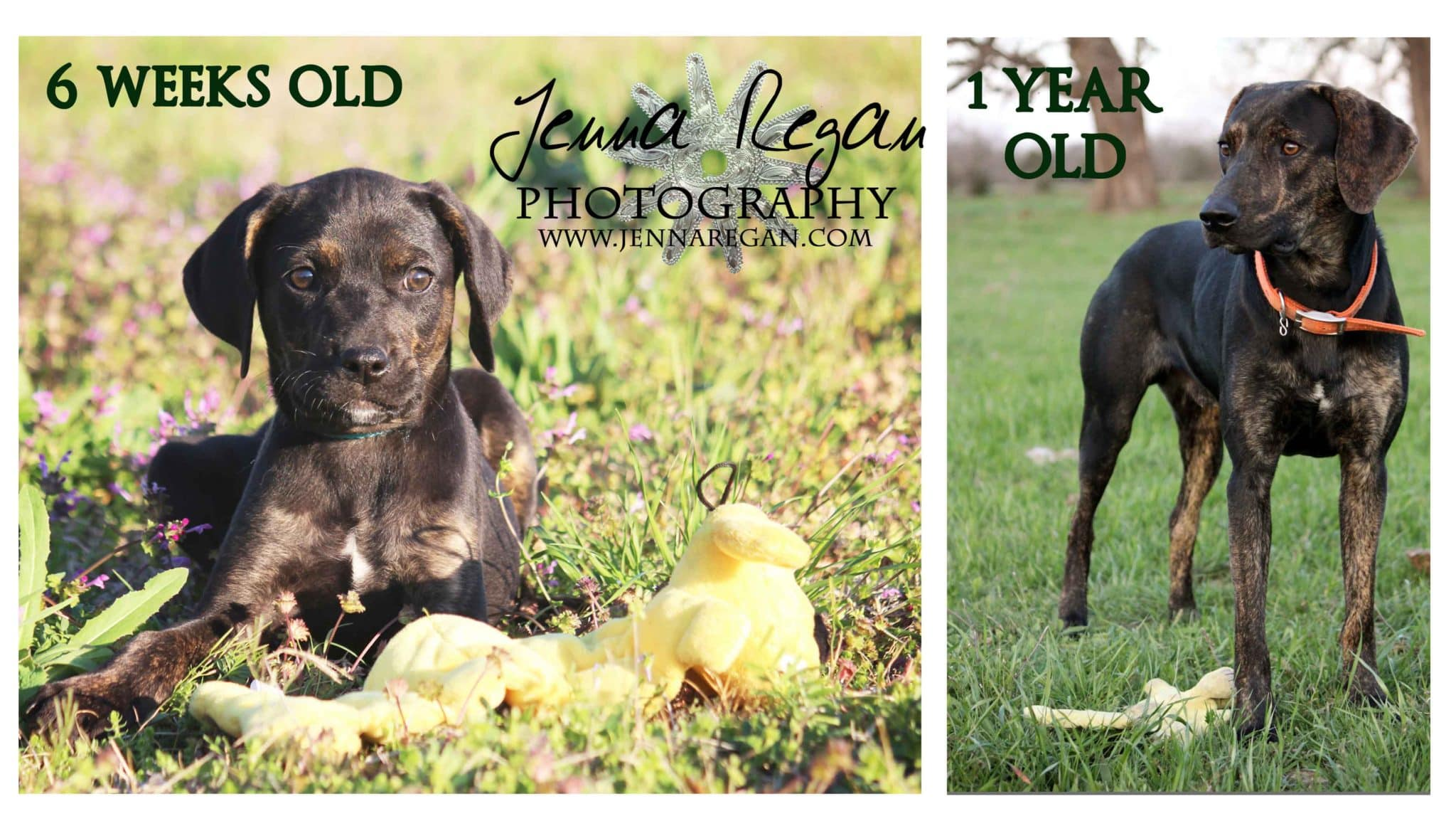 puppys-first-year-texas-dog-photography-packages