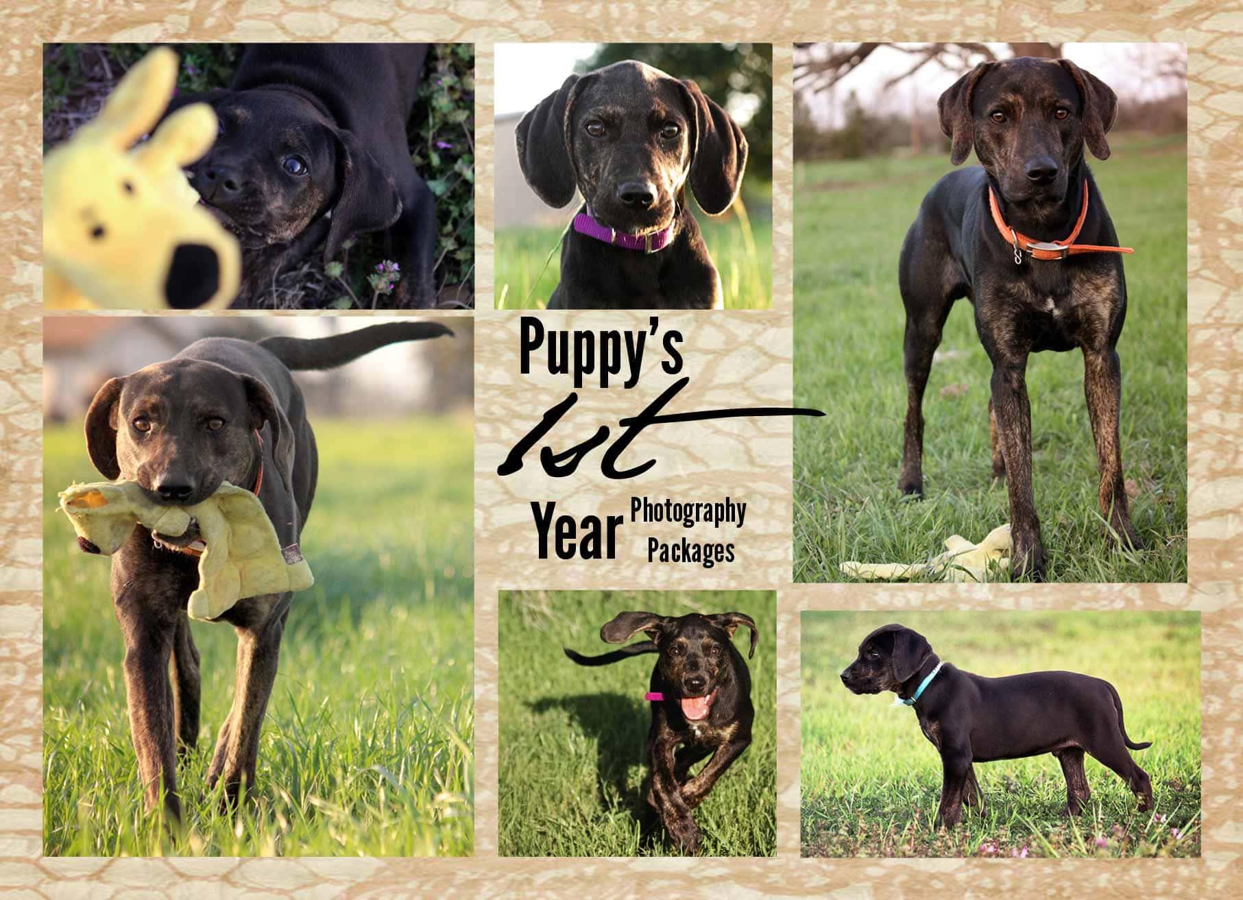 puppys-first-year-texas-pet-photographer