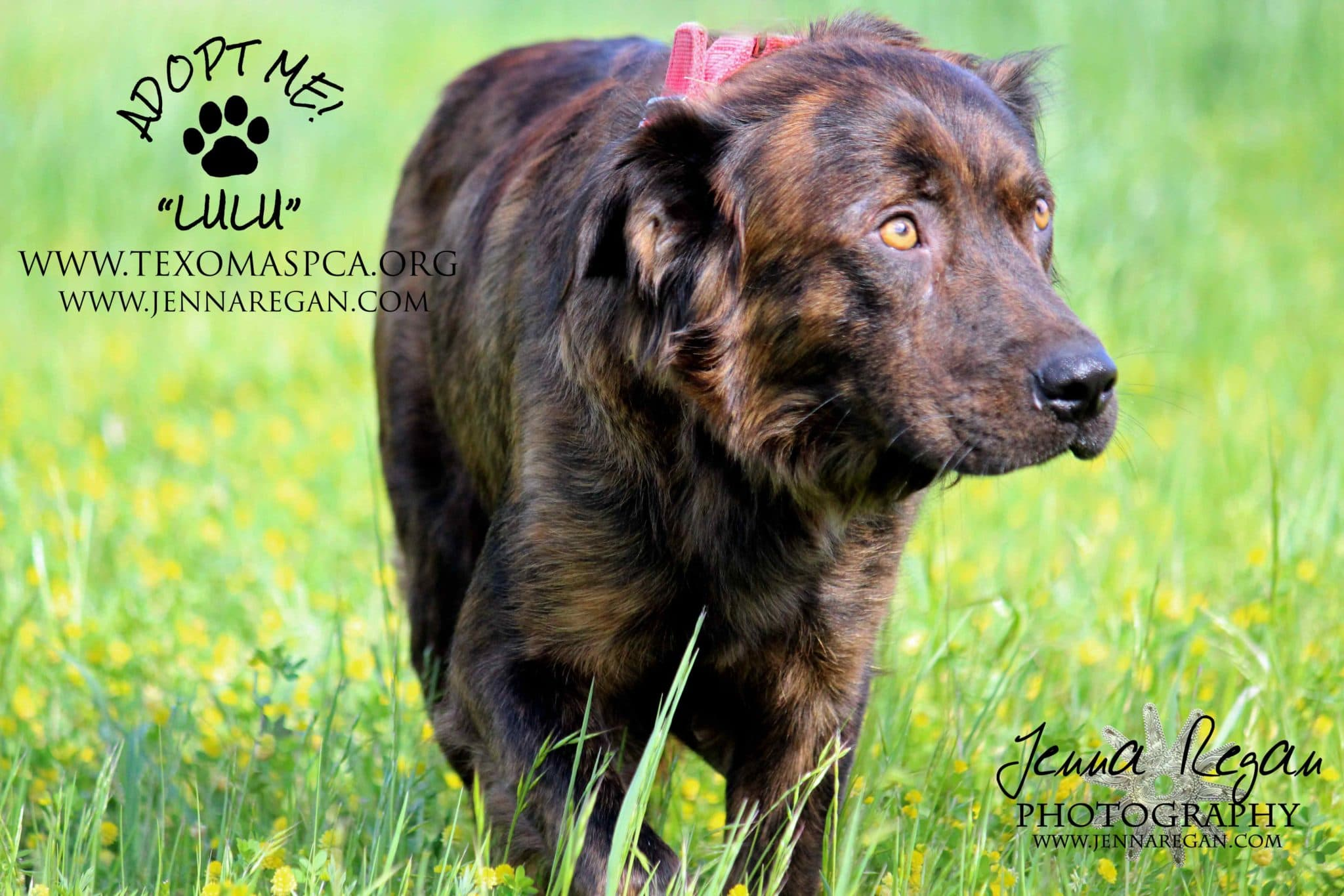 rescue dog photographer texas