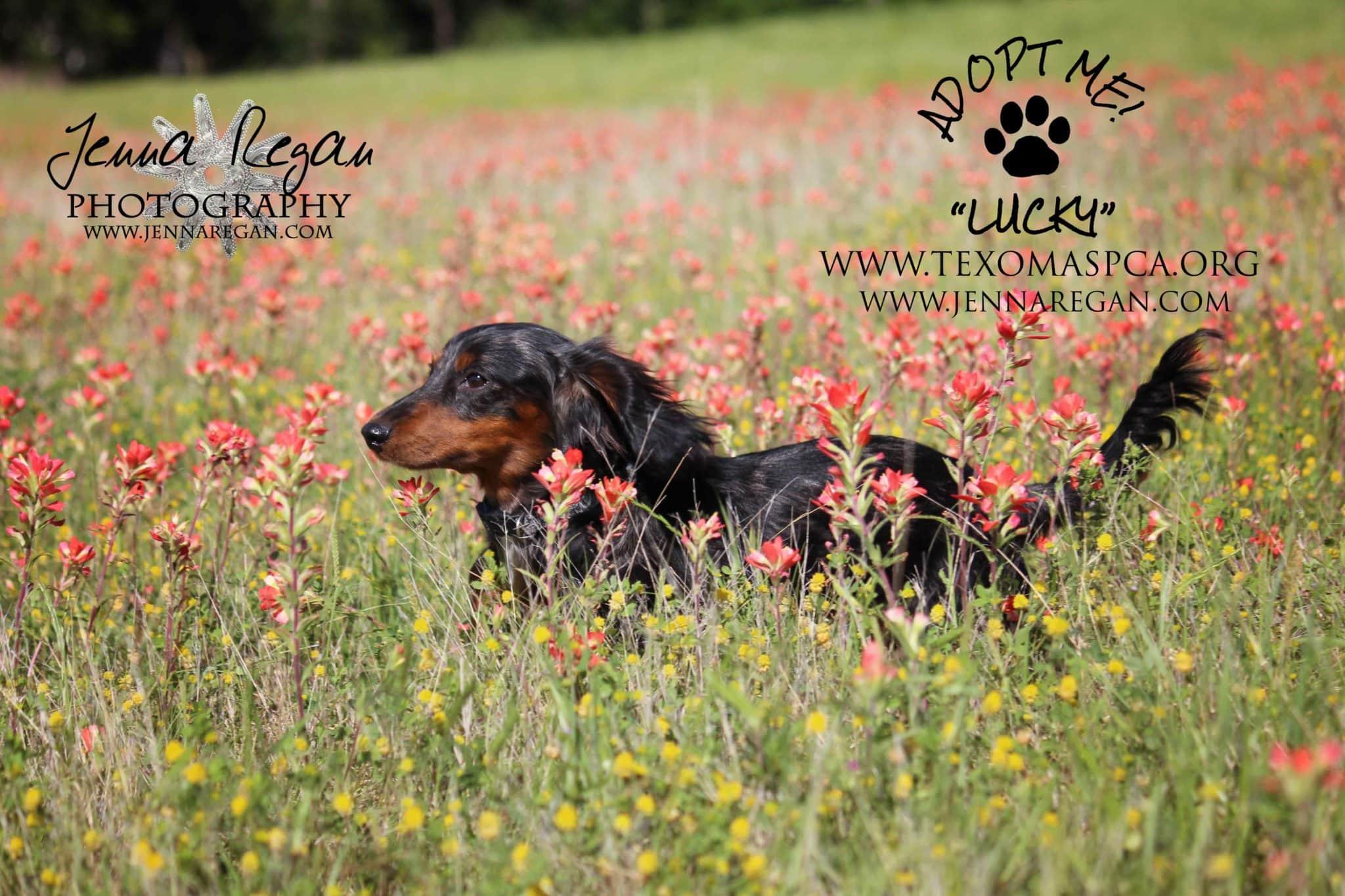 dashound rescue photography