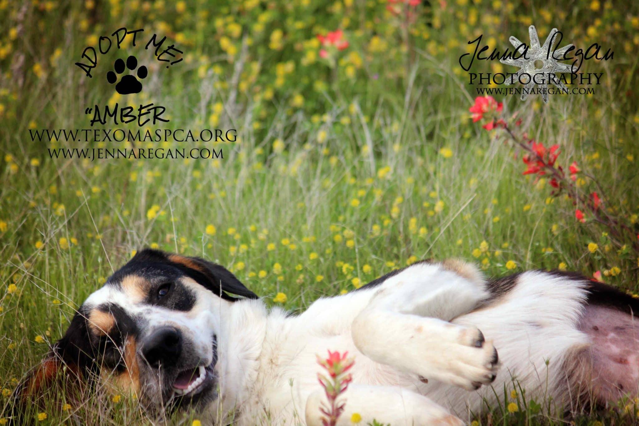 southern oklahoma pet photographer