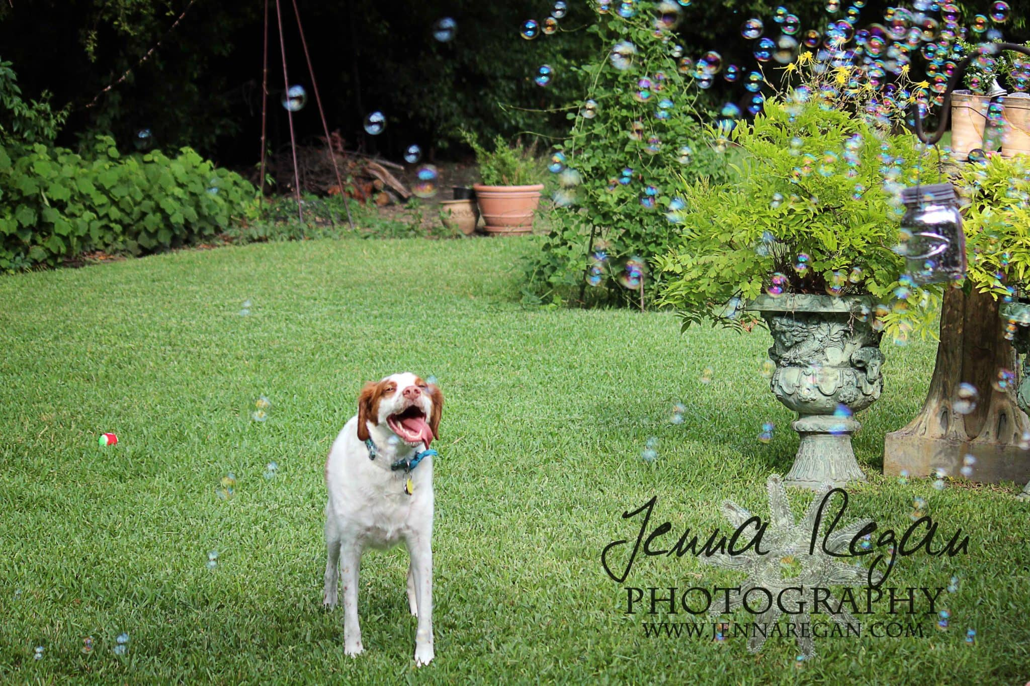capturing dogs personality through photo shoot