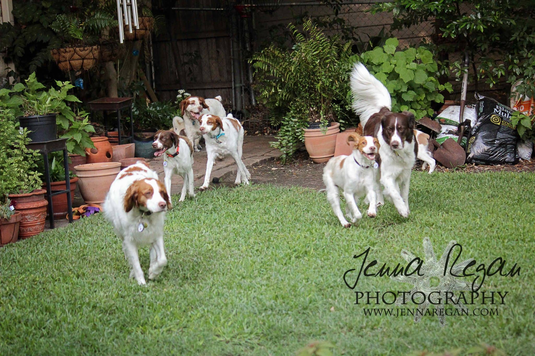 dogs playing photo shoot