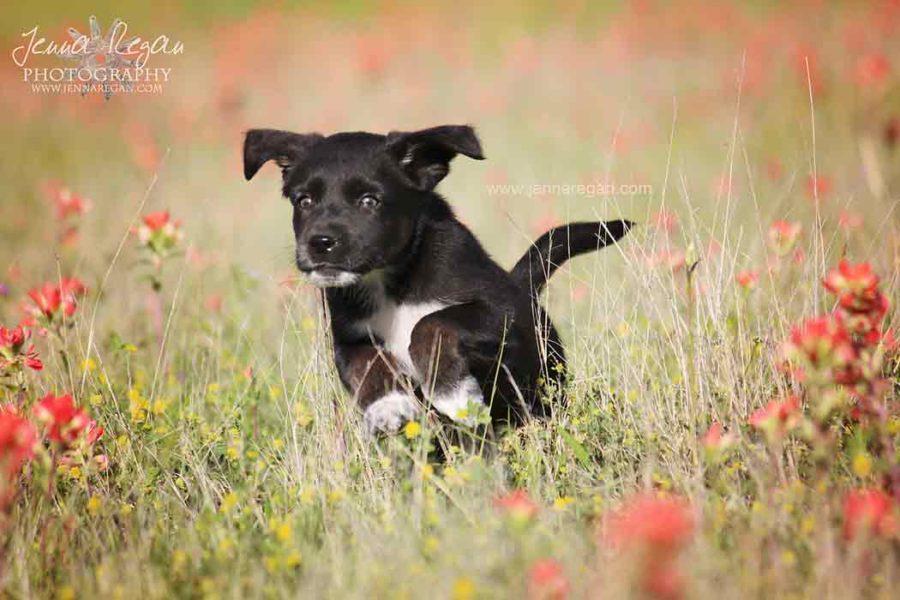 Texoma Pet Photography for the Texoma SPCA