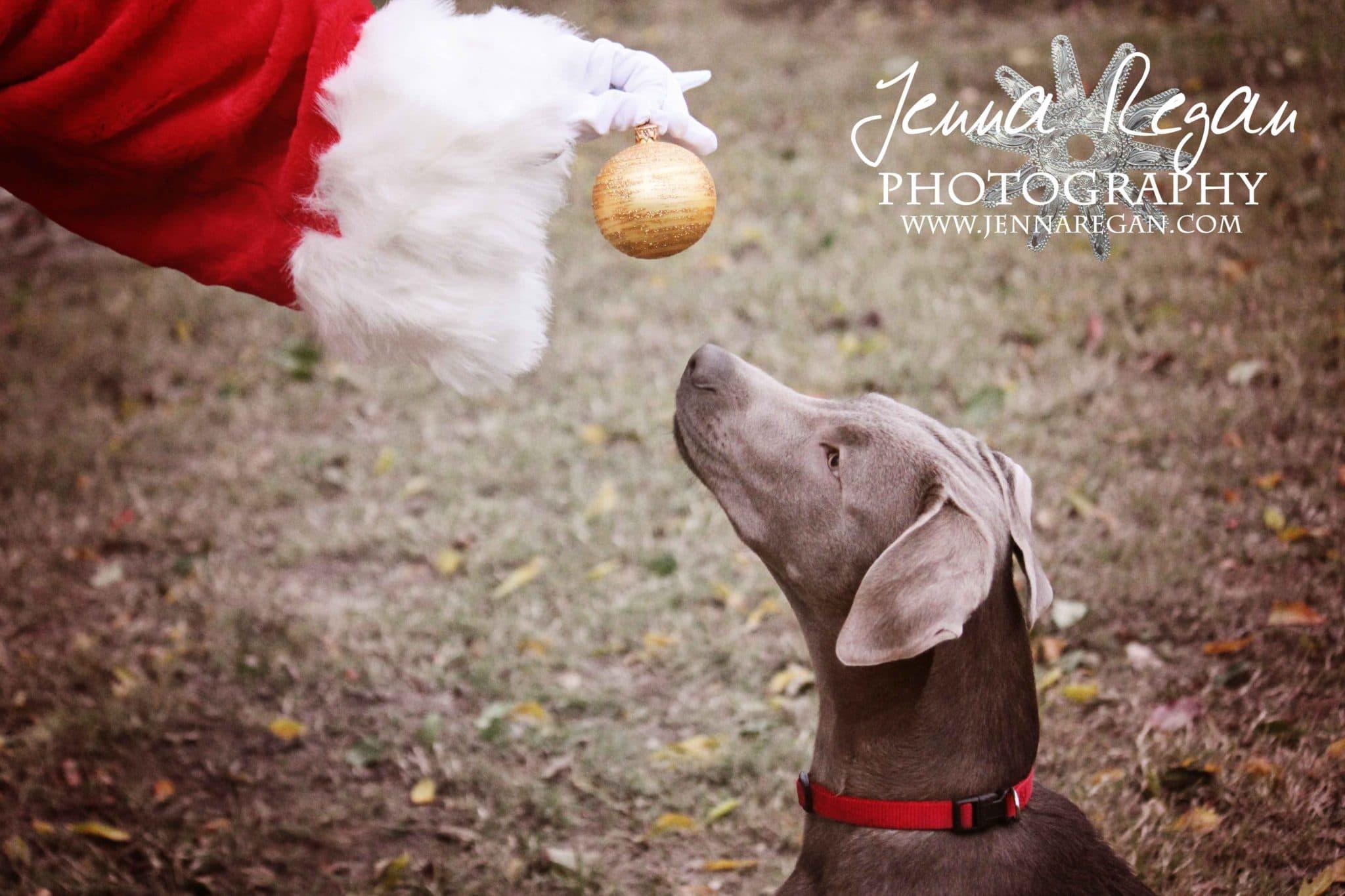 jenna-regan-pet-holiday-photos
