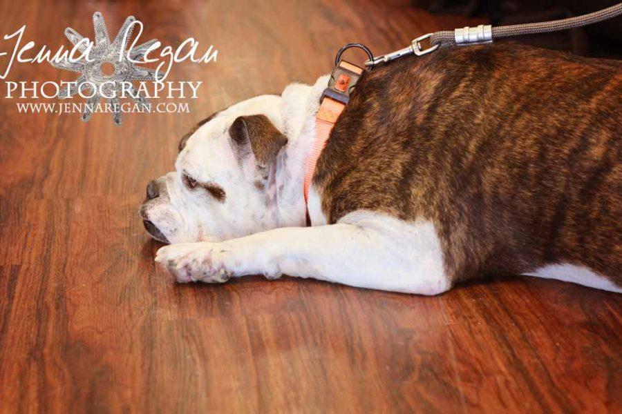 Lone Star Bulldog Club Rescue Event Photos